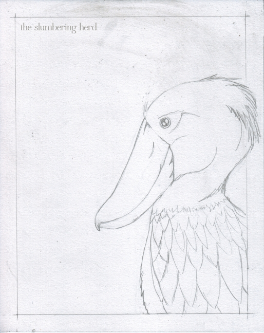 1 - Shoebill and Squirrel Sketch1