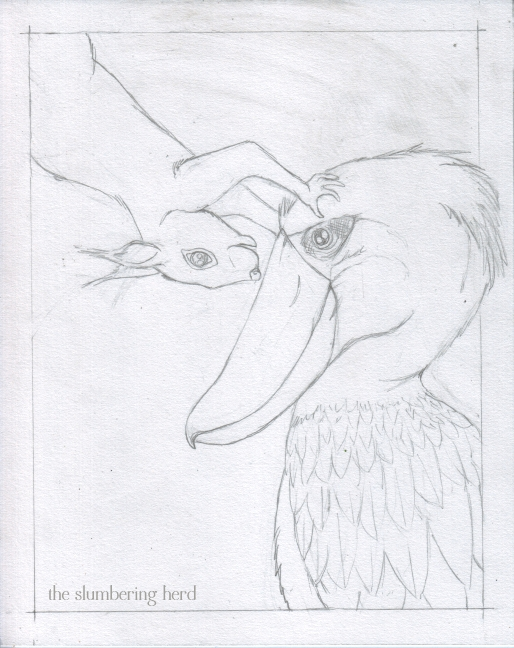 3 - Shoebill and Squirrel Sketch3