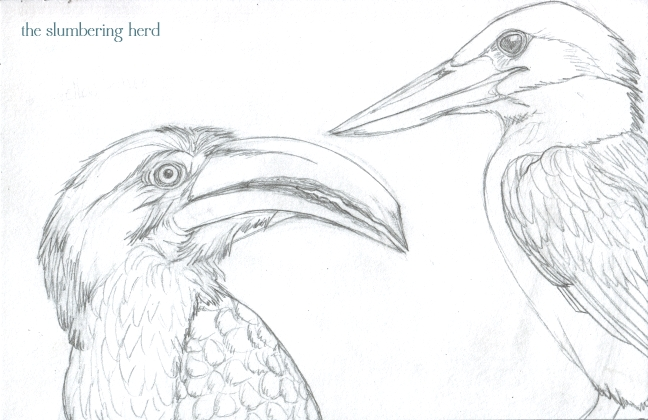 05 Hornbill and Kingfisher Sketch5