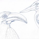 06 Hornbill and Kingfisher Ink1
