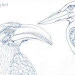 07 Hornbill and Kingfisher Ink2