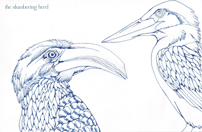 08 Hornbill and Kingfisher Ink3