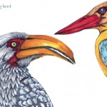 10 Hornbill and Kingfisher Color2