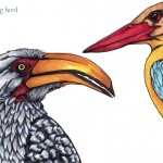 11 Hornbill and Kingfisher Ink4