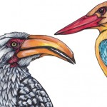 12 Hornbill and Kingfisher white pencil