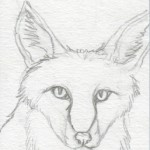 01 Red Fox Sketch