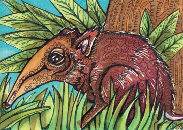 Giant Elephant Shrew ATC