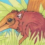 Giant Elephant Shrew color