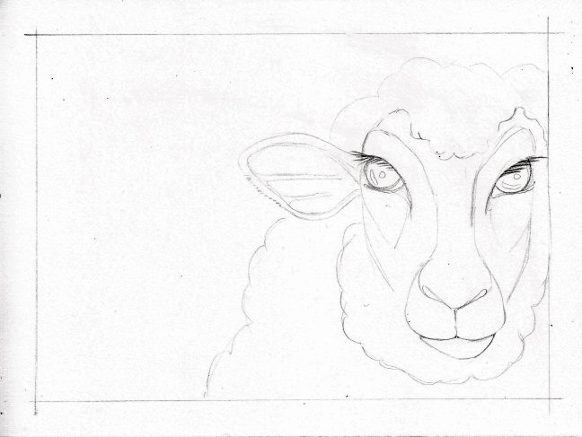 01 Two Sheep sketch1
