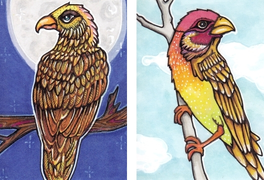 Peach-Crested Hawk and the Harmony Finch