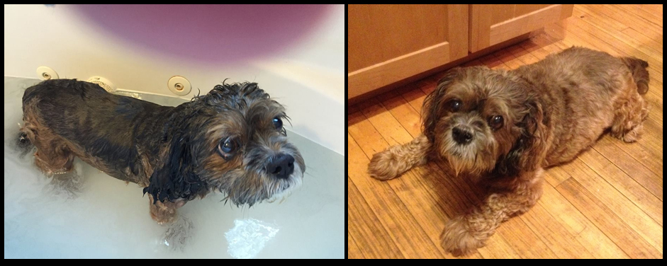 Wilson Curtis After being skunked April 2015, and kitchen Sept 2015